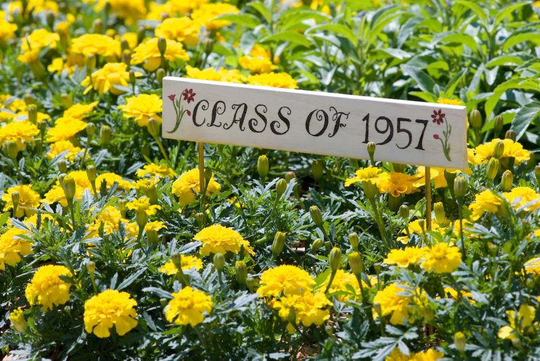 "Surrounded by yellow flowers, a wood marker reads ""Class of 1957."""
